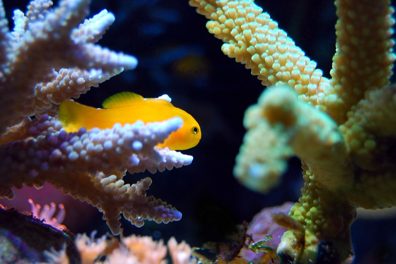 Pulisce l'acquario e il gas tossico di un corallo avvelena la famiglia