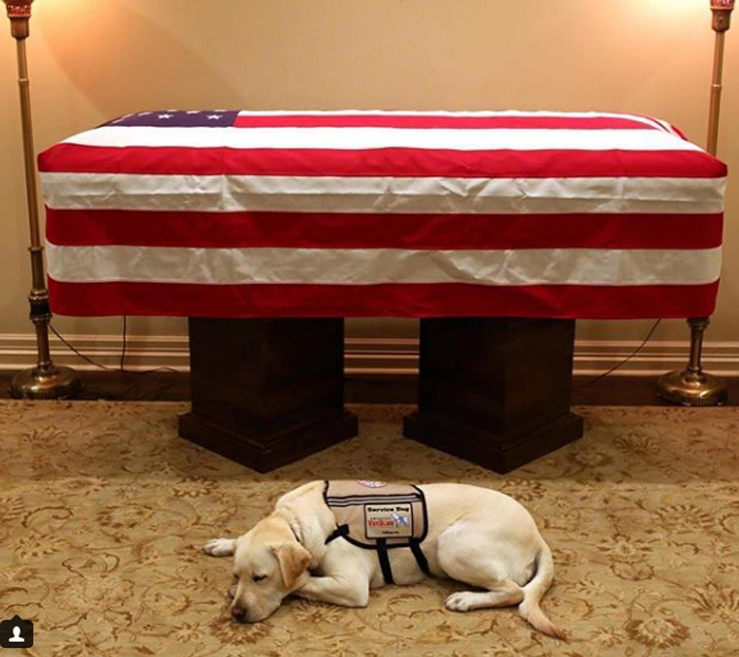 Morto George Bush Senior, il cane veglia la sua bara