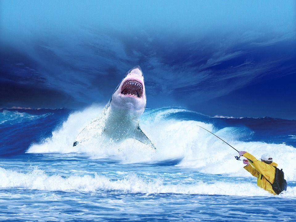 immagini divertenti mare