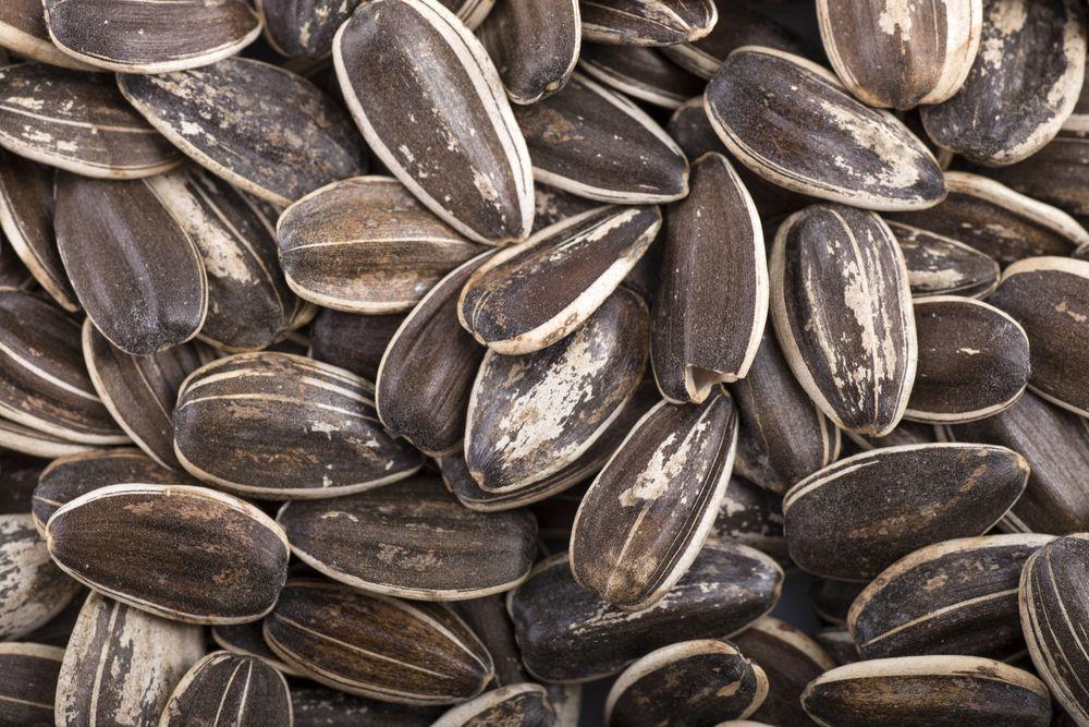 semi di giralose