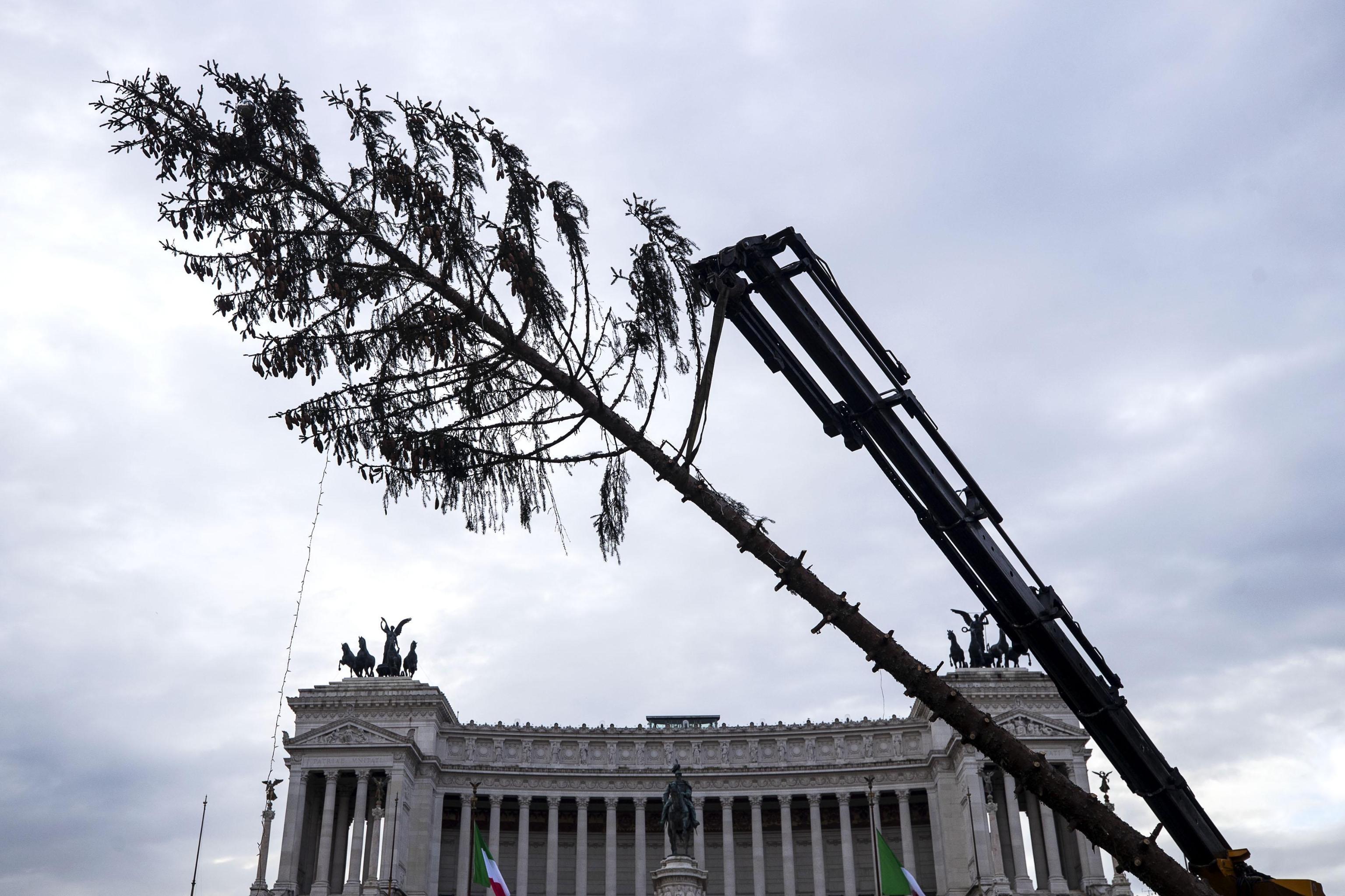 Spelacchio in Val di Fiemme: la seconda vita dell'abete rosso del Natale 2017 a Roma