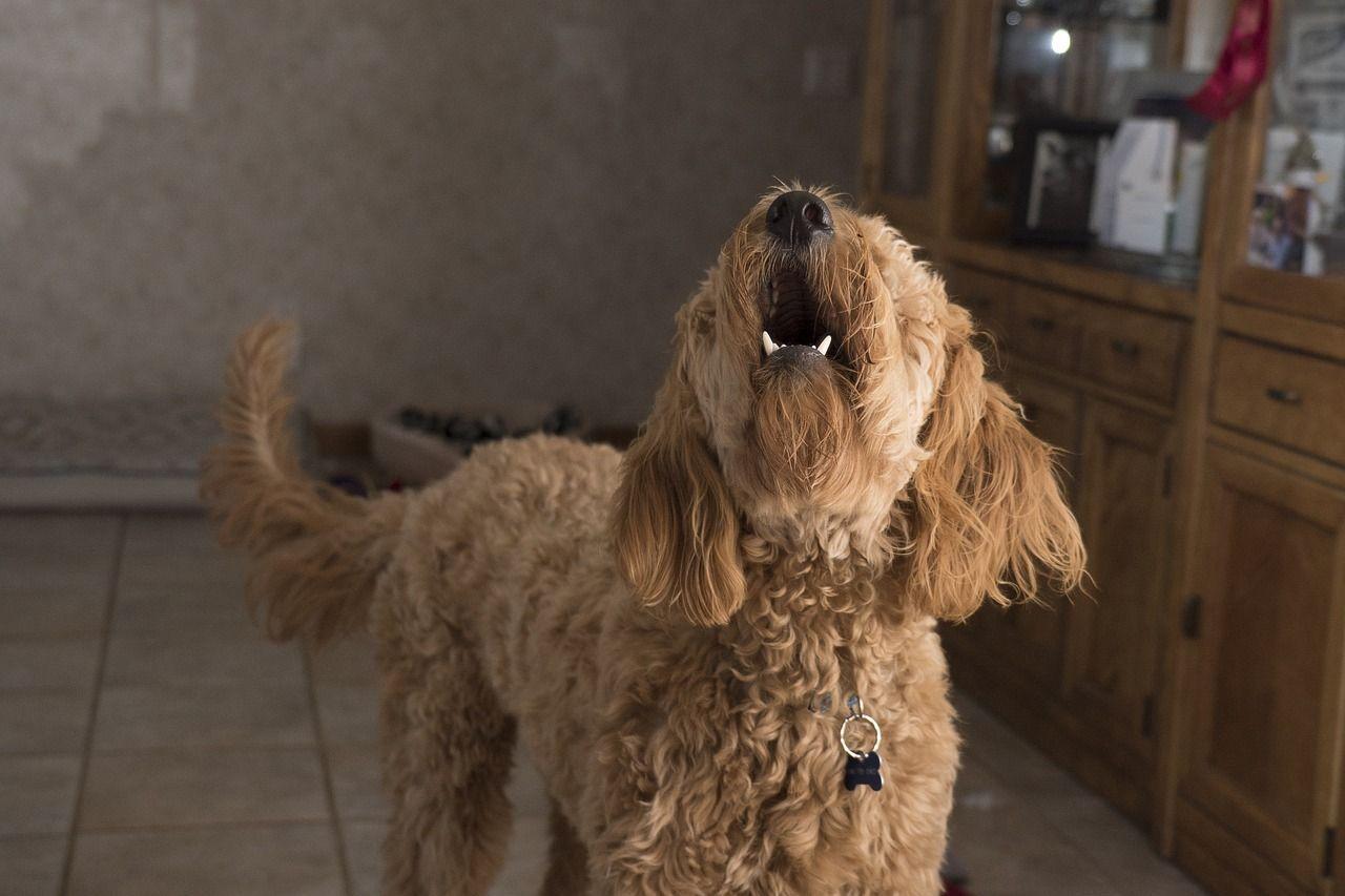 22enne colto da malore in casa da solo, viene salvato dal suo cane