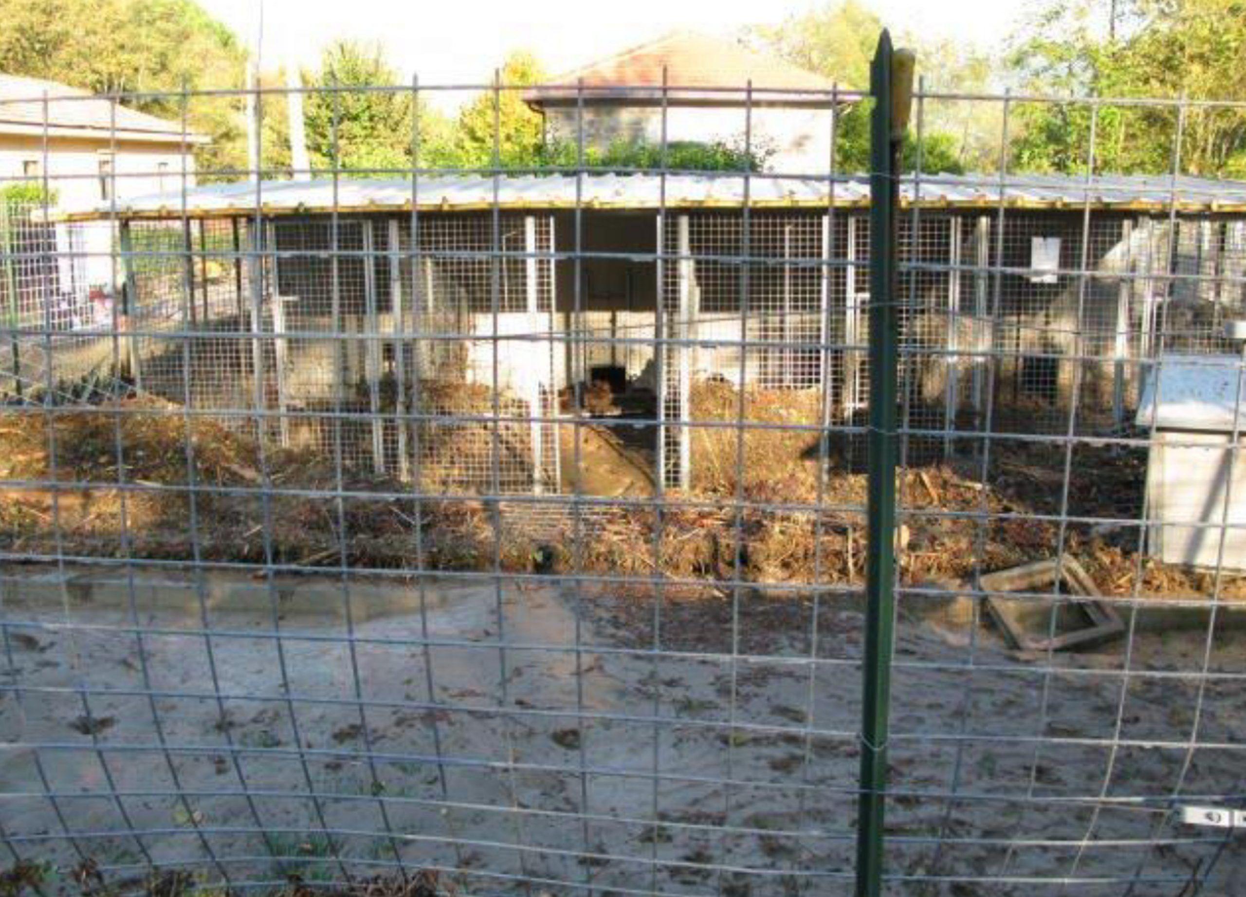 Cani abbandonati e divorati dai vermi padre e figlio condannati