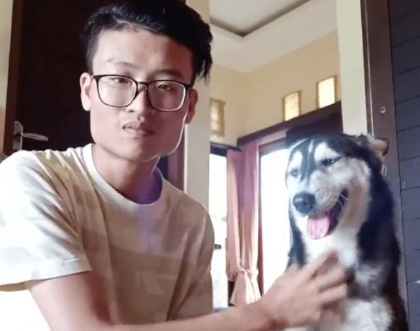 Husky abbandonato dopo 11 mesi