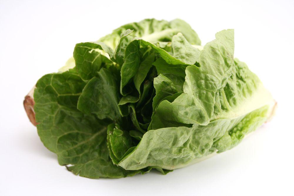 Escherichia coli: insalata romana infetta causa un'epidemia negli Stati Uniti