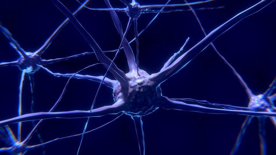Il trapianto di ricordi tramite Rna, l'esperimento tra due lumache