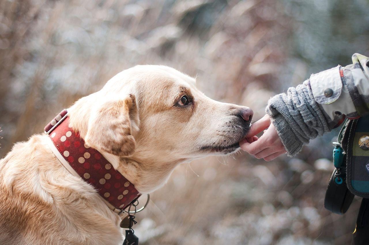 Cane guida approfitta della padrona non vedente per andare ogni volta nel negozio di animali