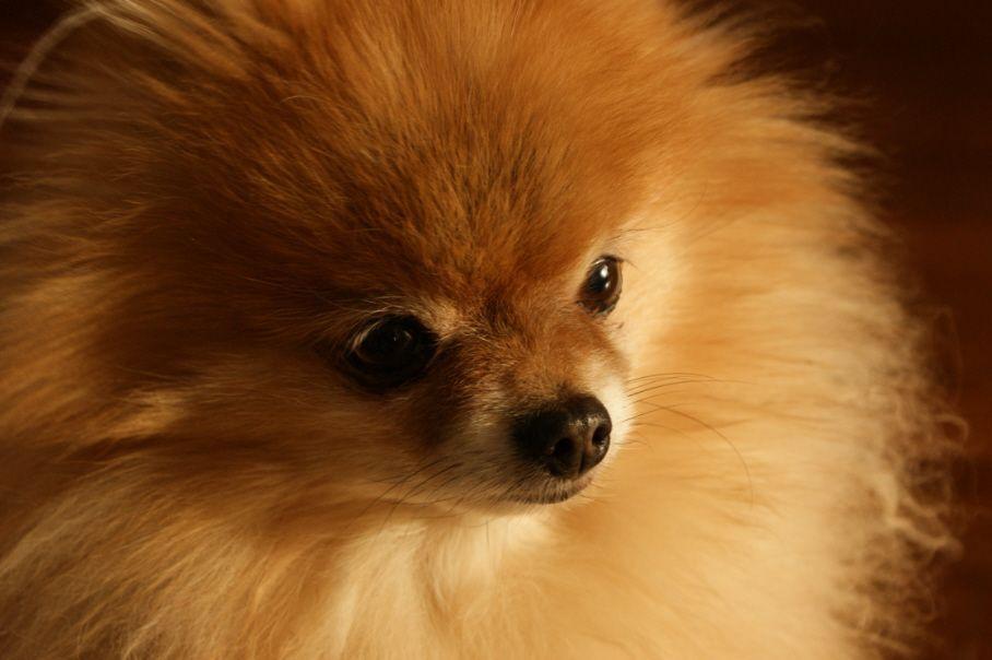 Cane muore chiuso nella stiva di un aereo: bufera sulla Delta Air Lines