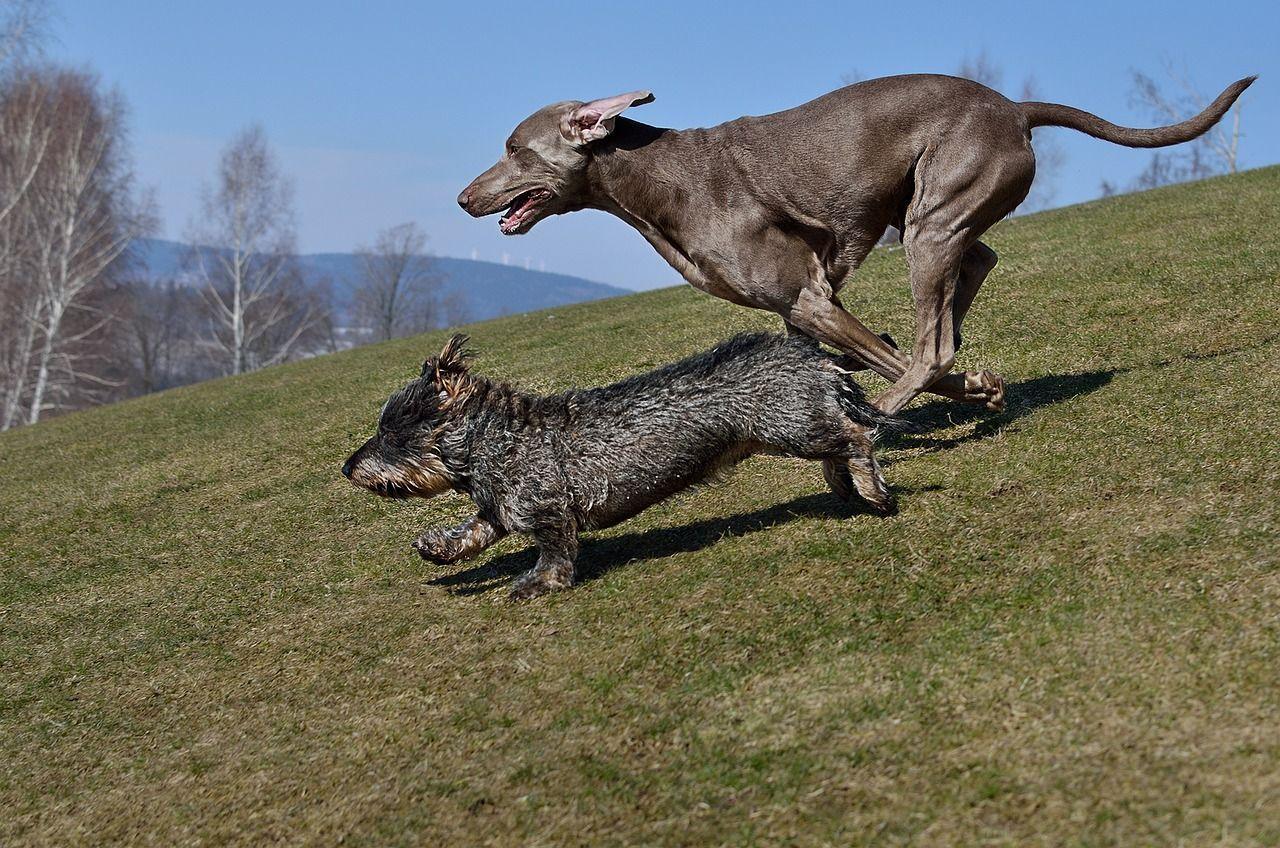 Donna di 52 anni aggredita da un branco di cani randagi infestati dalle pulci