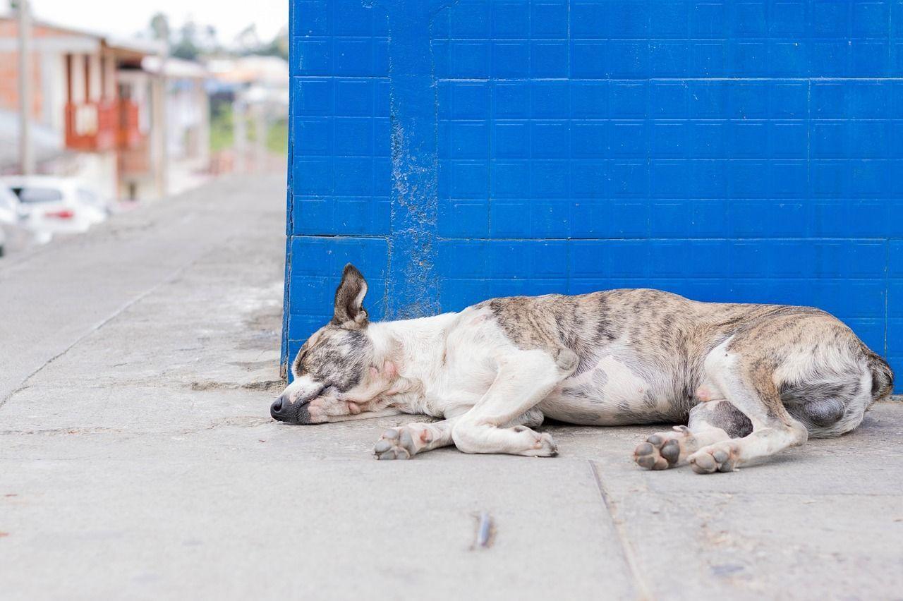 Kansas, cani senza cibo stremati si danno al cannibalismo: allevatrice condannata a un anno di carcere