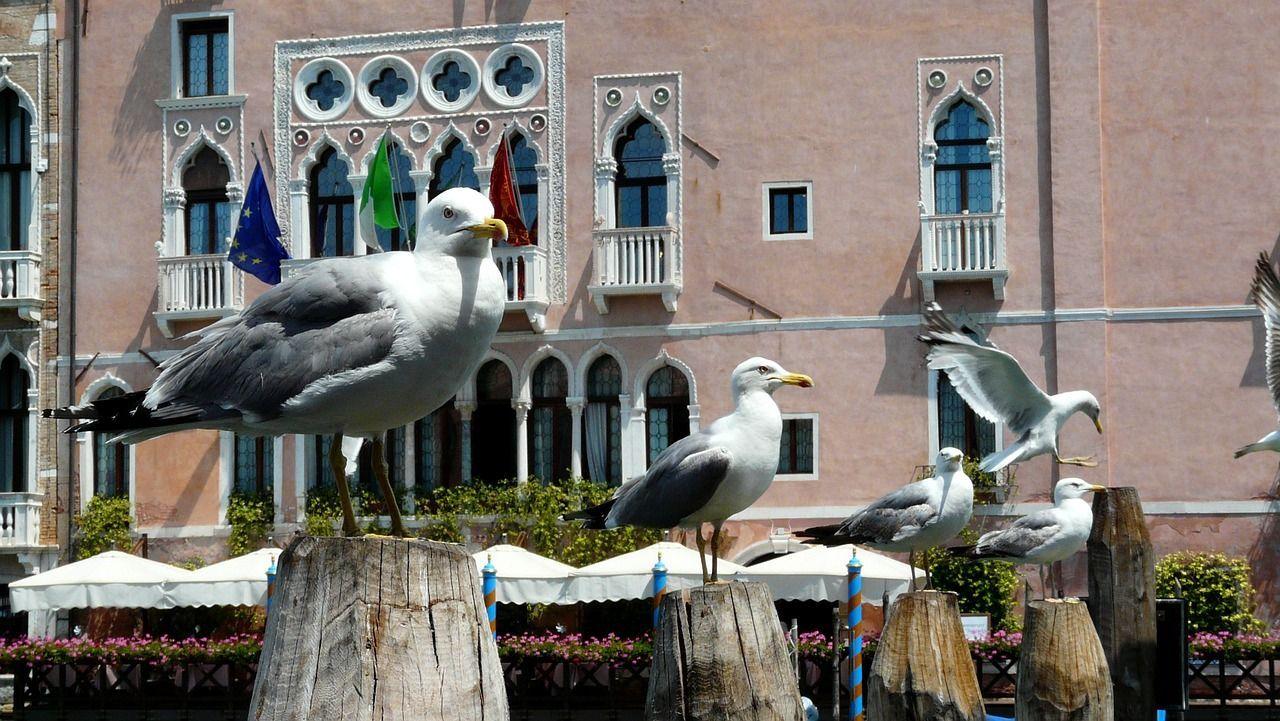 Venezia, gabbiano aggredisce una turista ferendole il labbro 'Servono provvedimenti'