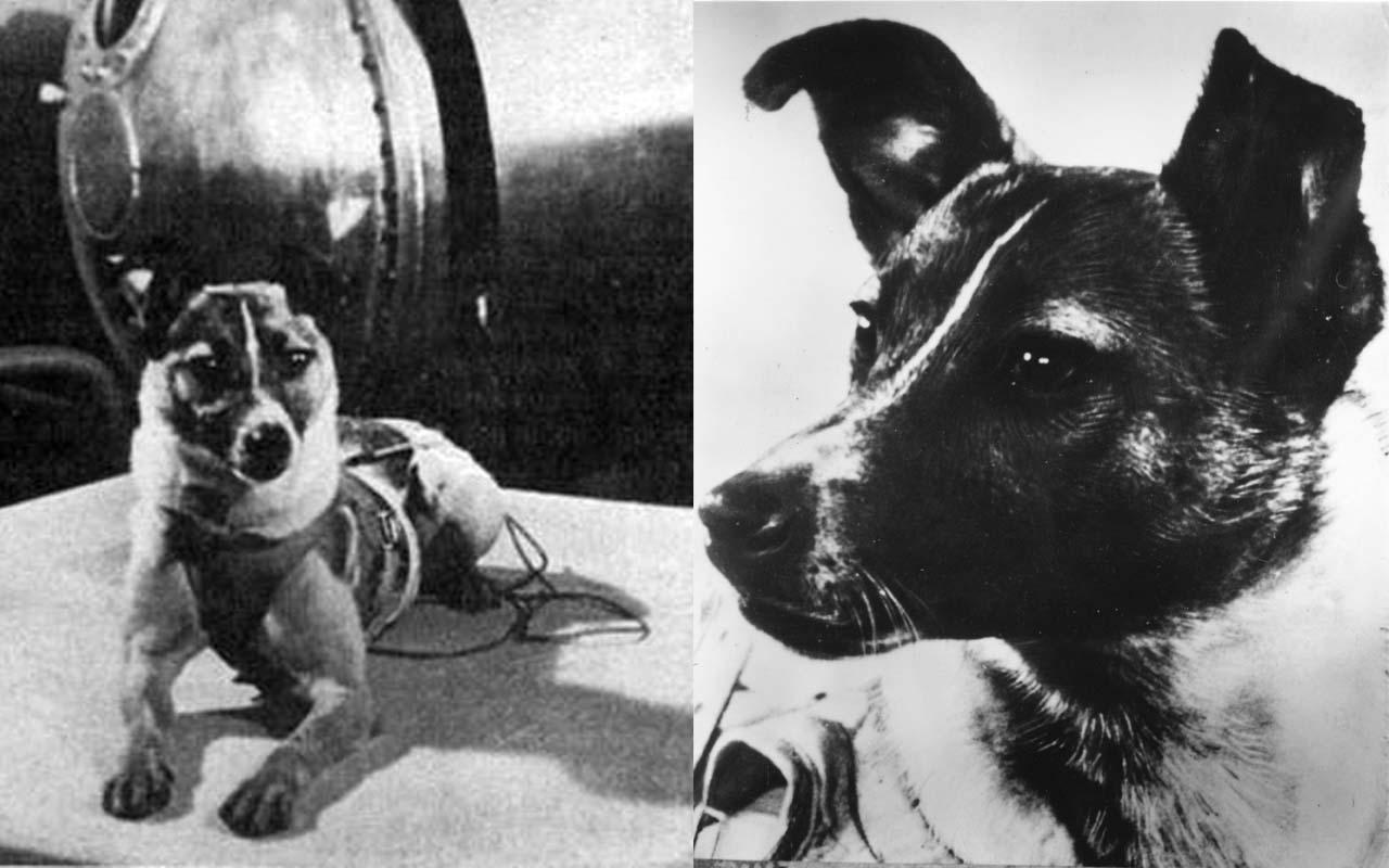 Laika nello spazio: la verità sul cane che venne mandato in orbita dai russi