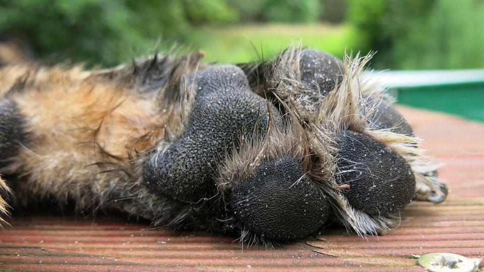 Due cani bruciati vivi in Valtellina: 'Abbaiavano troppo'