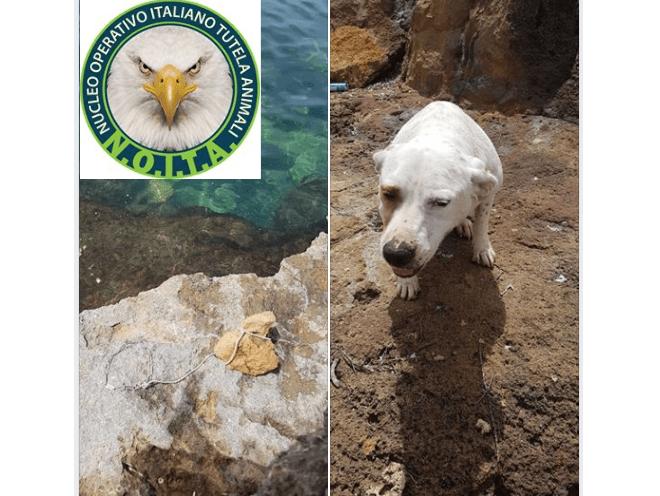 cane gettato in mare con pietra al collo