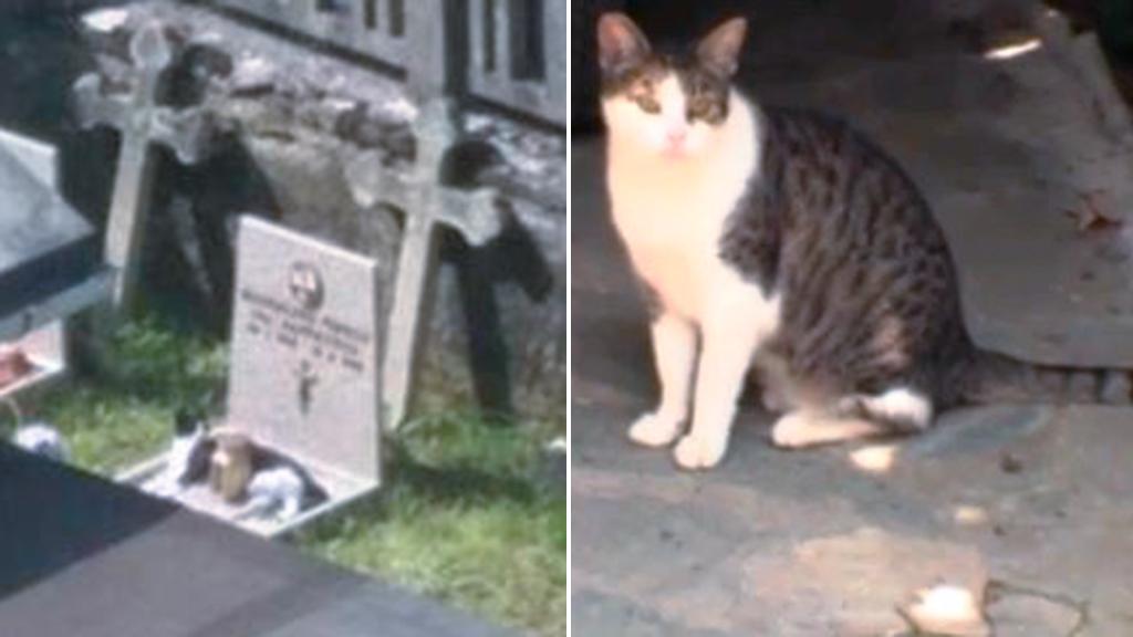 Teresina, la gatta che dorme sulla tomba della padrona