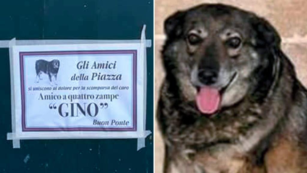 L'ultimo saluto al cane Gino, manifesti funebri per il beniamino di Campi Salentina