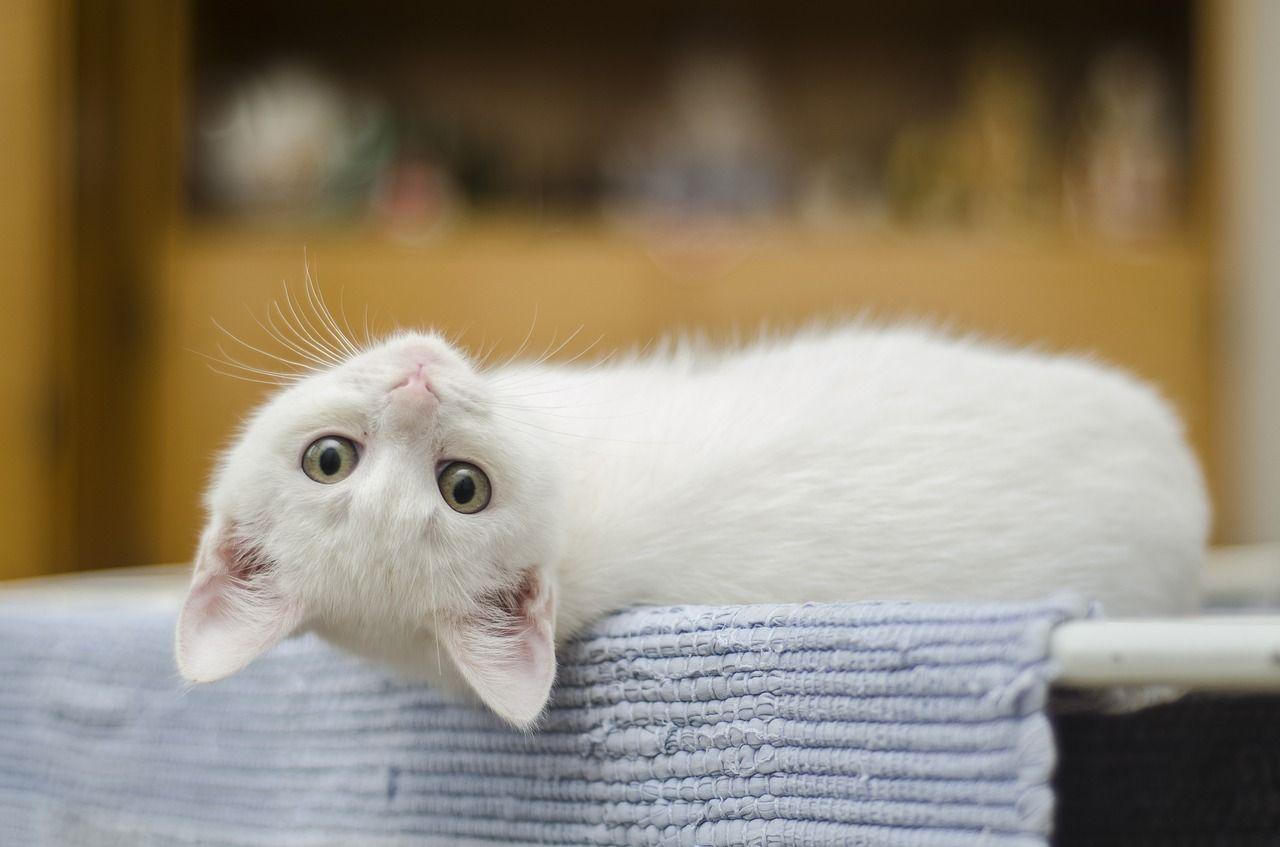 Adottare un gatto fa bene al cuore: numerosi i benefici per i cardiopatici