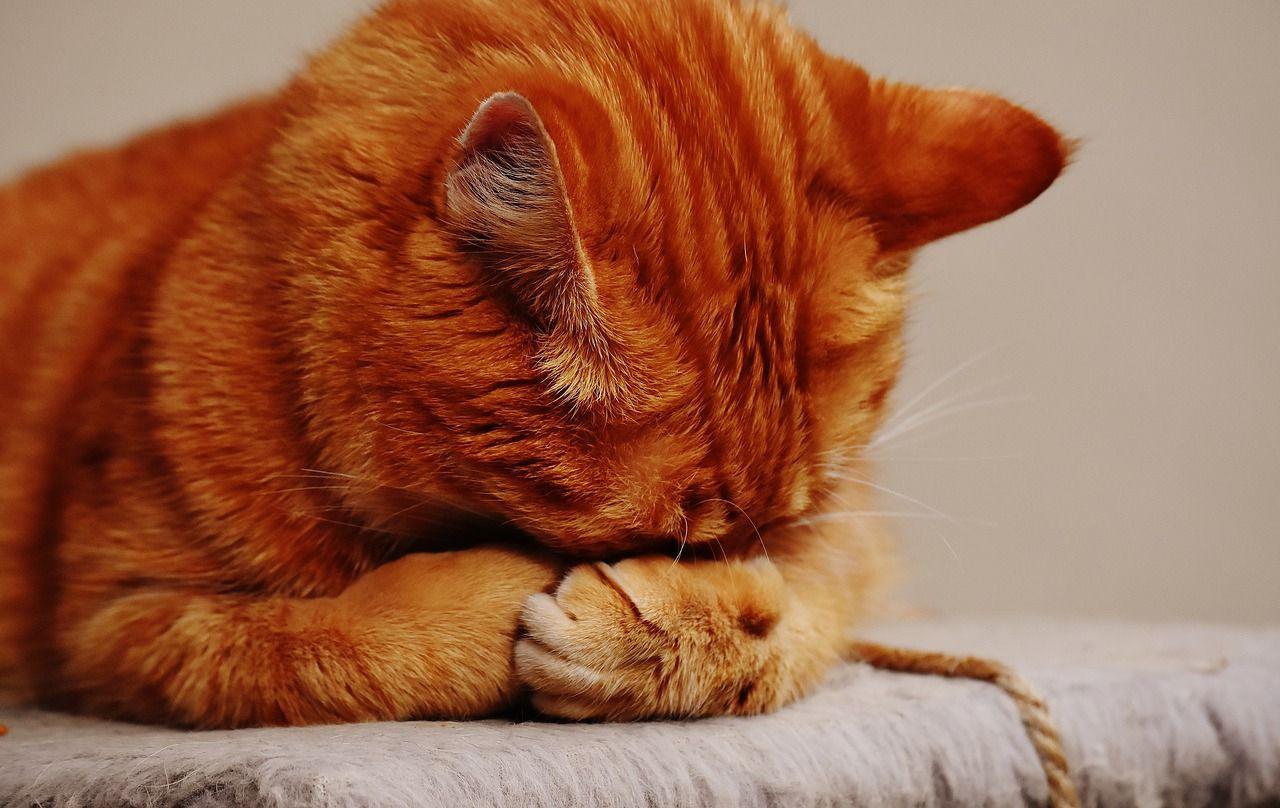 Torino gatto precipita dall'ottavo piano in testa a un passante. Proprietario a processo