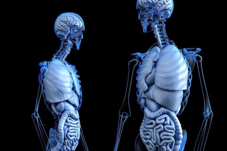 anatomia a