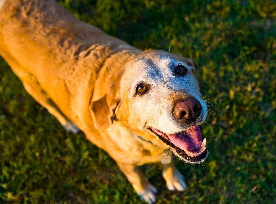 La casa di riposo per cani orfani a Bracciano è la prima in Europa