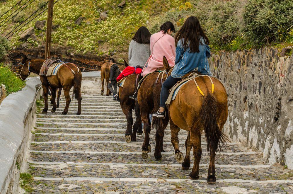 Santorini: niente passeggiate in groppa agli asini per i turisti obesi