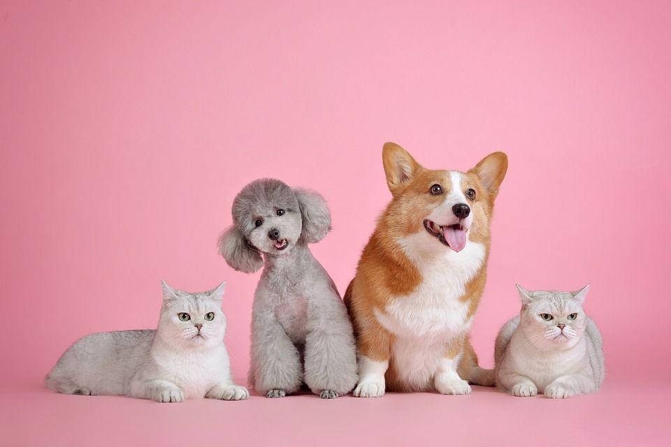 Diabete: anche cani e gatti ne soffrono ma i padroni non lo sanno