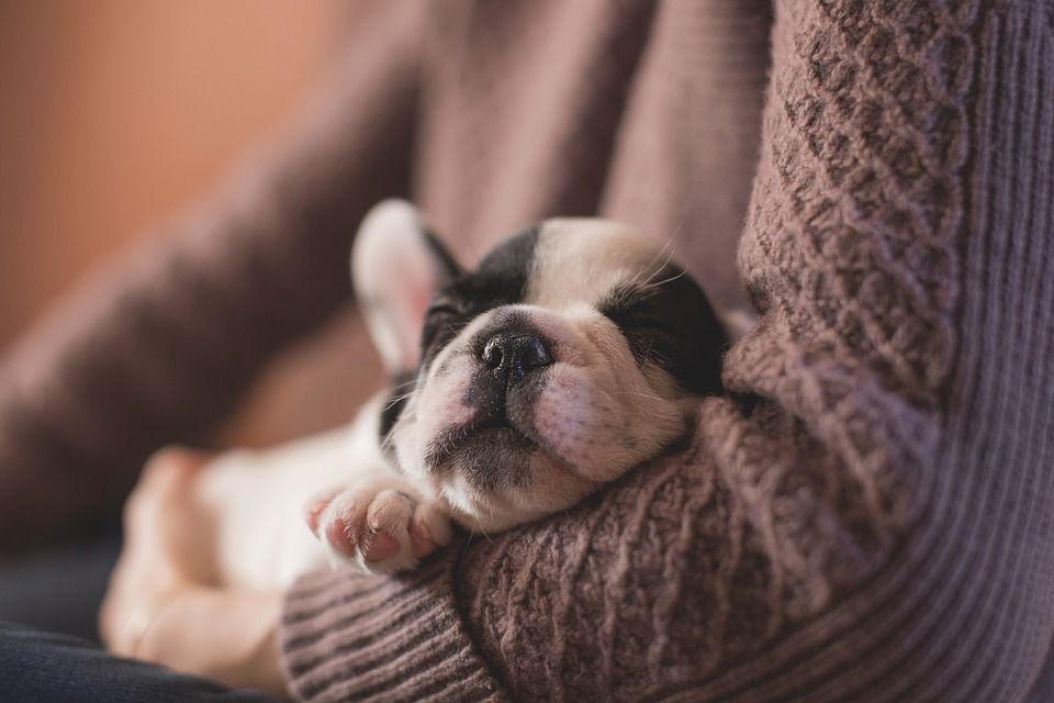 Offresi lavoro dei sogni: coccolare cani per 88 euro l'ora