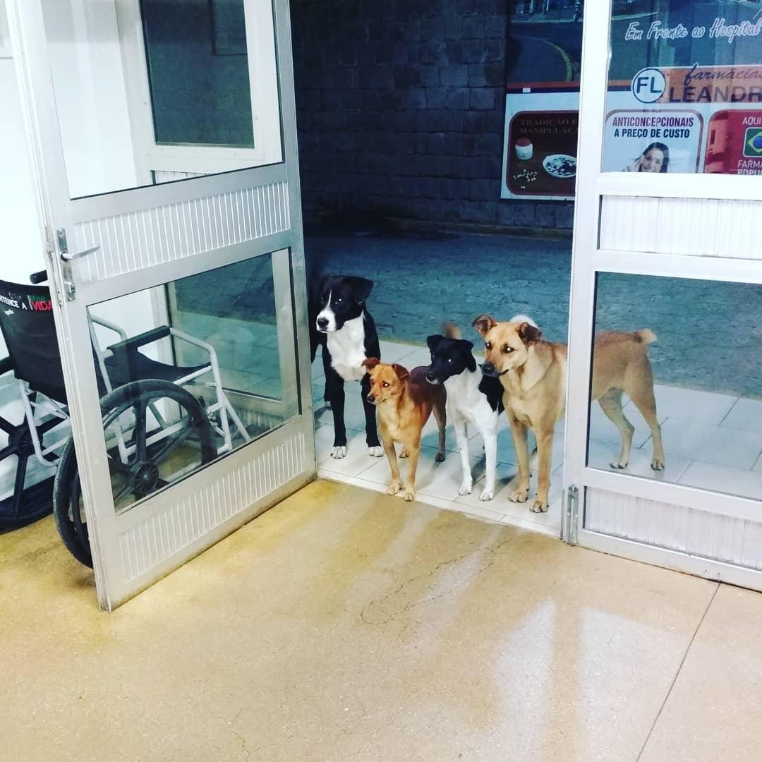 Senzatetto viene ricoverato, i suoi cani lo aspettano per ore fuori dall'ospedale