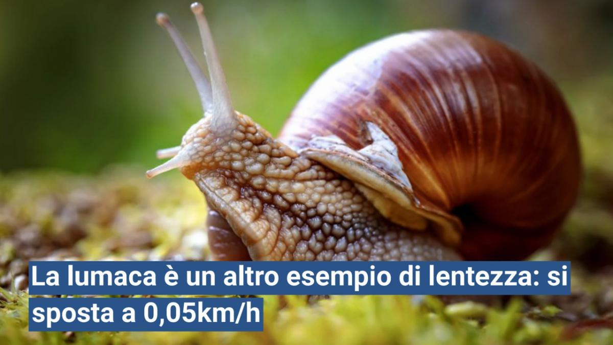 Animali molto lenti: la top ten