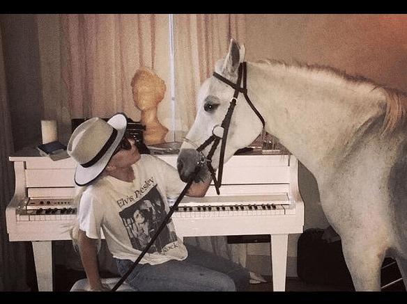 Lady Gaga abbandona cerimonia di premiazione per assistere il cavallo in fin di vita