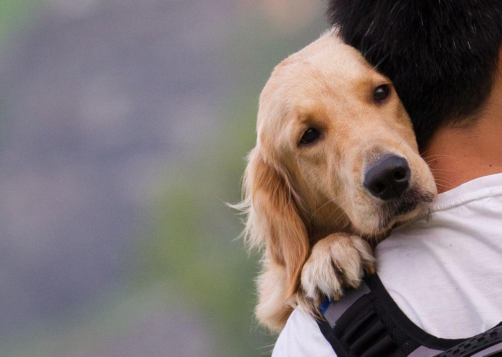 Parvovirosi canina: i rischi della gastroenterite che colpisce i cani