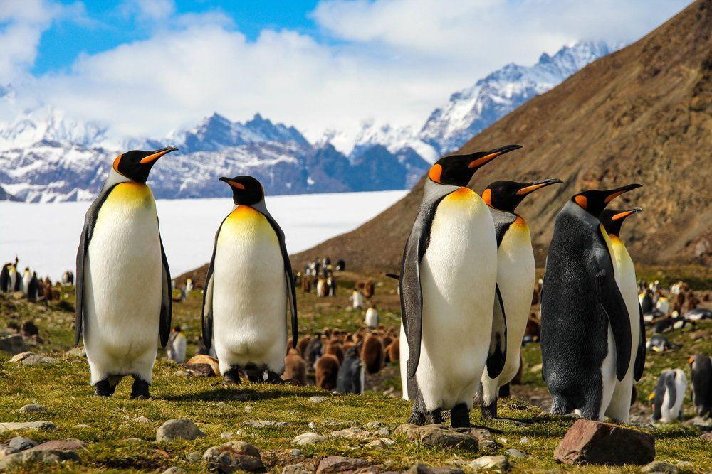 Cambiamenti climatici: 20,7 gradi in Antartide, temperature record