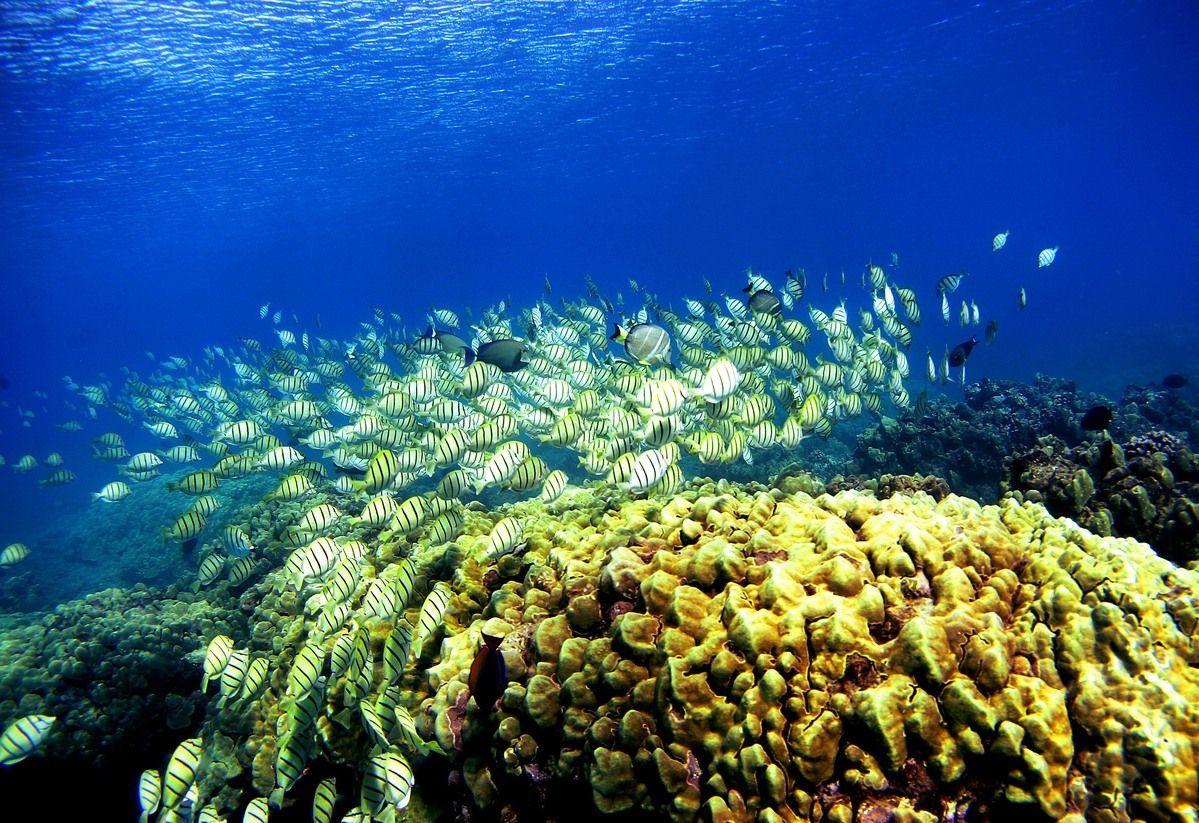 Grande Barriera Corallina, è emergenza: persa la metà dei coralli