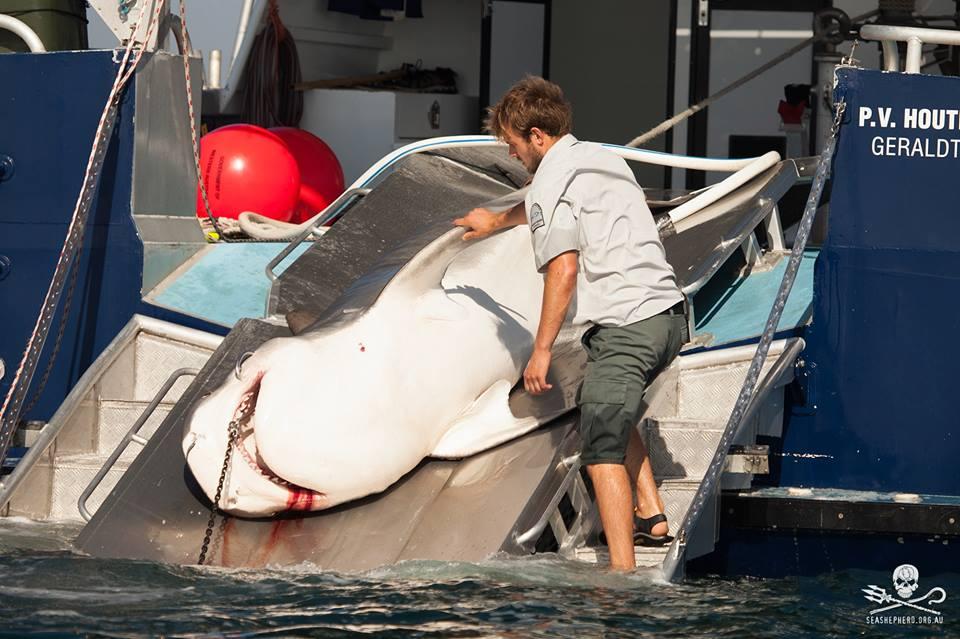 squalo ucciso