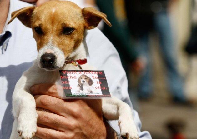 Giornata mondiale per gli animali nei laboratori: un modo per combattere la crudeltà
