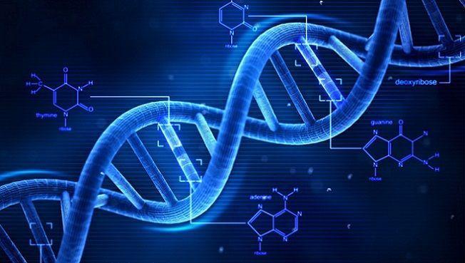 Differenze tra DNA e RNA: cosa sono e a cosa servono