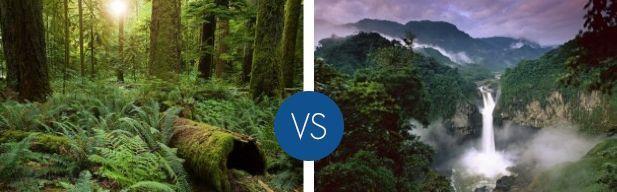Qual è la foresta più bella del mondo?