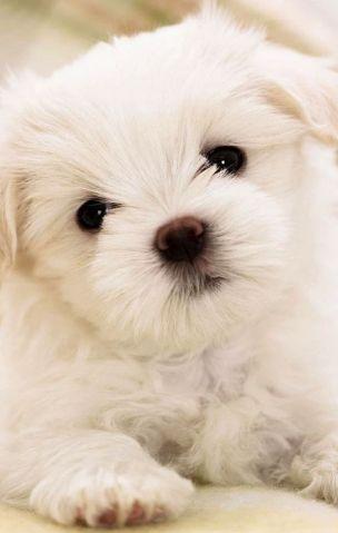 Conosci davvero il tuo cane? Scoprilo con un quiz