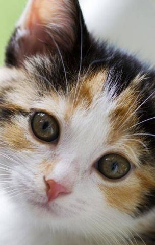 Quanto conosci il tuo gatto? [QUIZ]