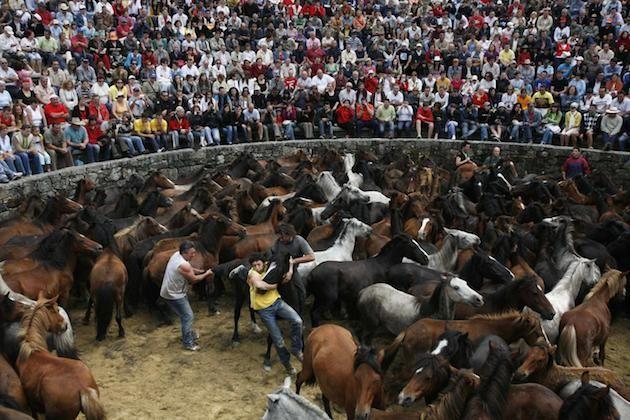 Rapa das bestas in Spagna: la crudele tradizione dei cavalli selvaggi domati
