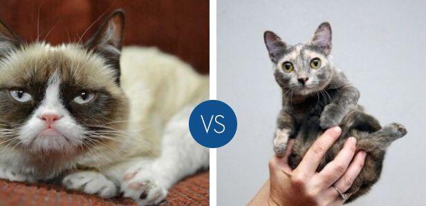 Quale animale famoso del web preferisci?