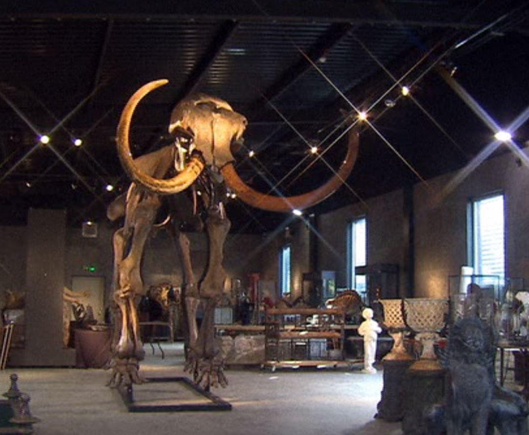 Londra, all'asta scheletro di mammut per 250mila dollari