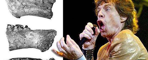 Animali con nomi dei vip: dall'alce Mick Jagger alla vespa Lady Gaga