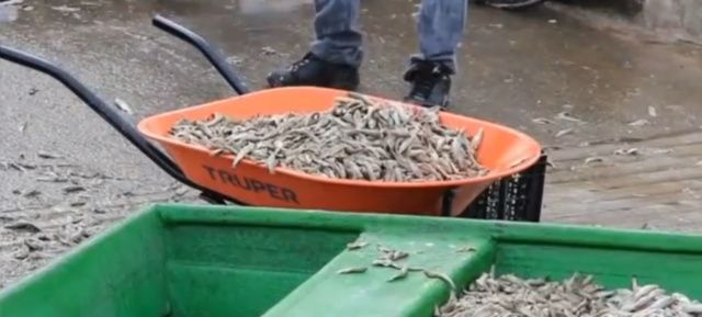 pesci morti lago cajititlan
