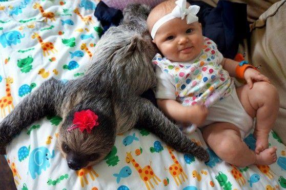 La bambina e il bradipo: amici inseparabili