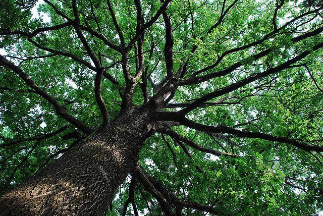 Festa dell'albero 2014: il 21 novembre eventi in tutta Italia