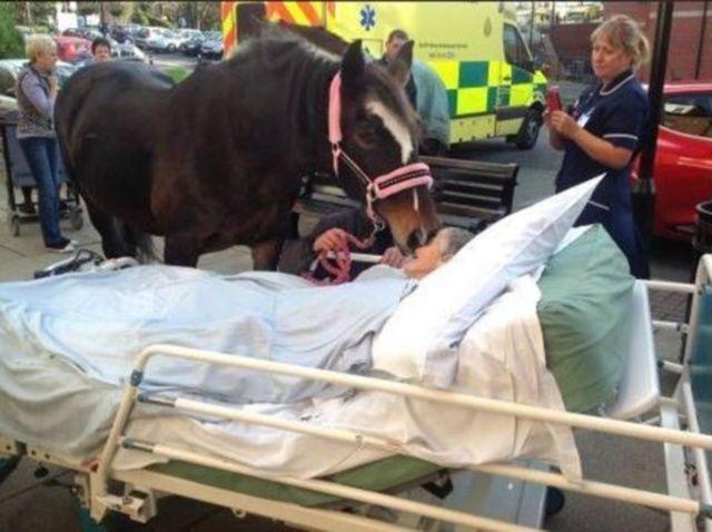 padrona morente cavallo in ospedale