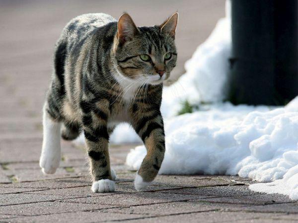 gatto-torna-a-casa