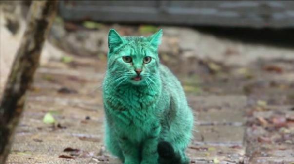 Il mistero del gatto verde in Bulgaria