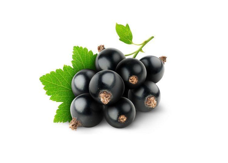 Ribes nigrum: proprietà terapeutiche, antinfiammatorie e controindicazioni